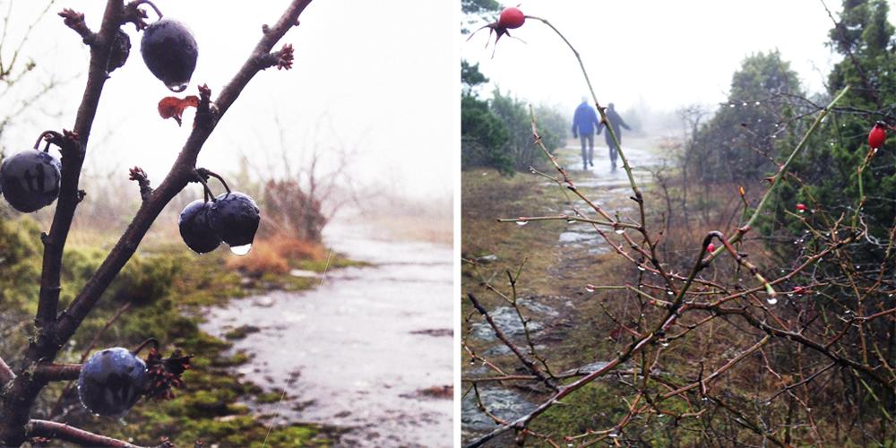 Gotland slånbär och nypon