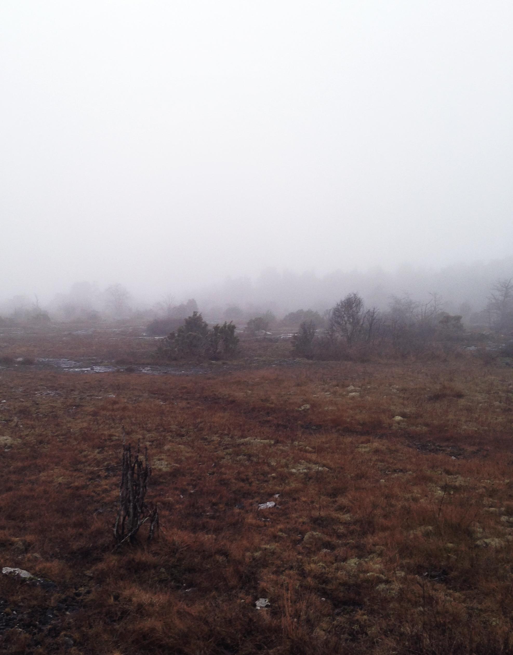 Hed vid Kyllaj på Gotland