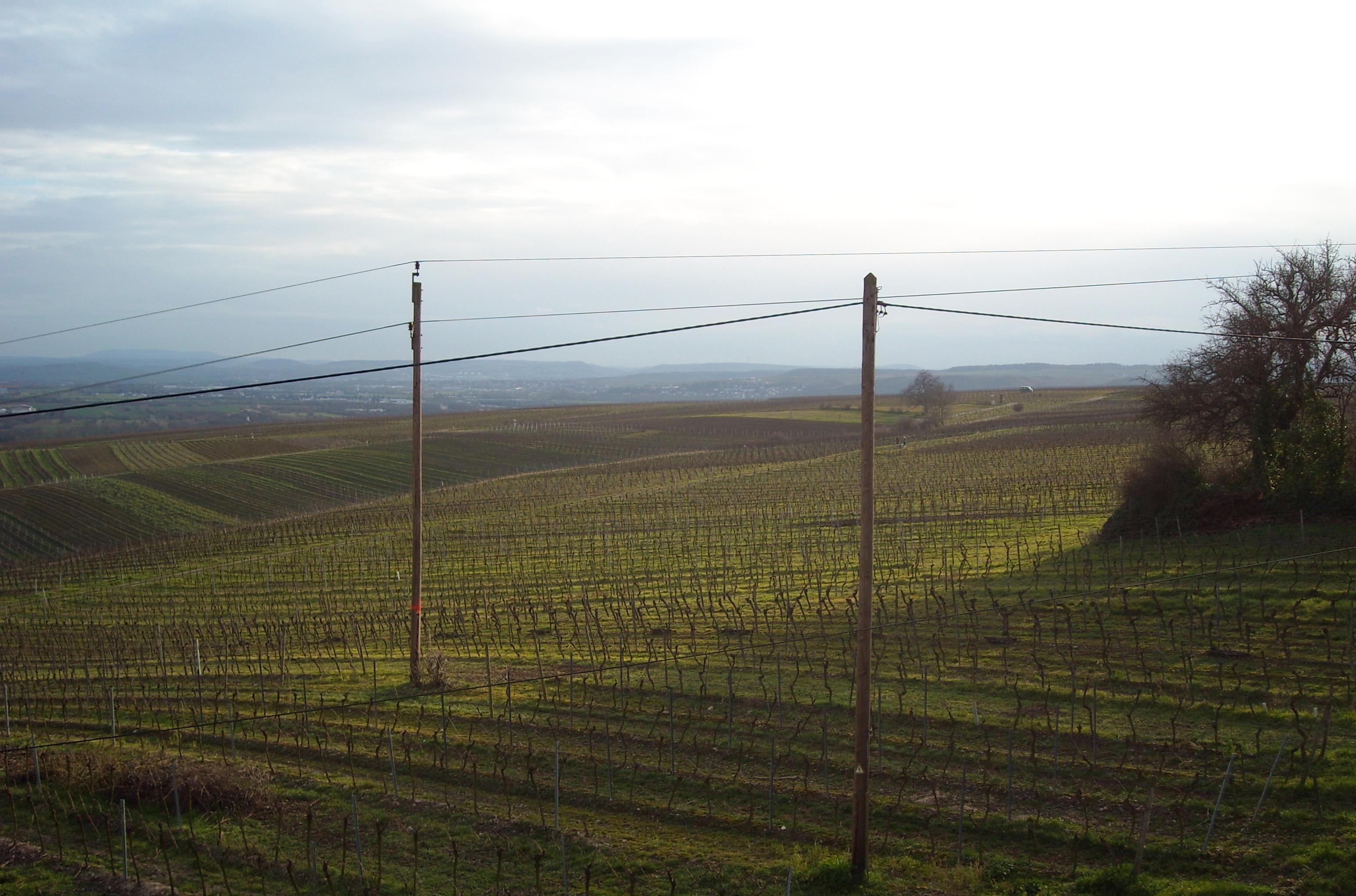 vinodlingar