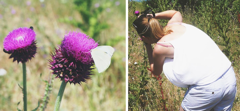 Bulgarian butterfly