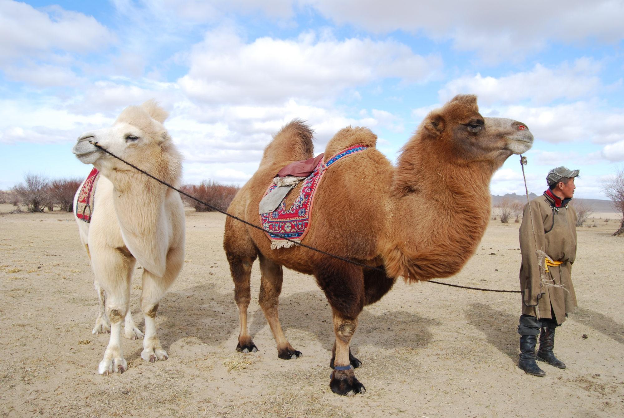 Mongoliet resa