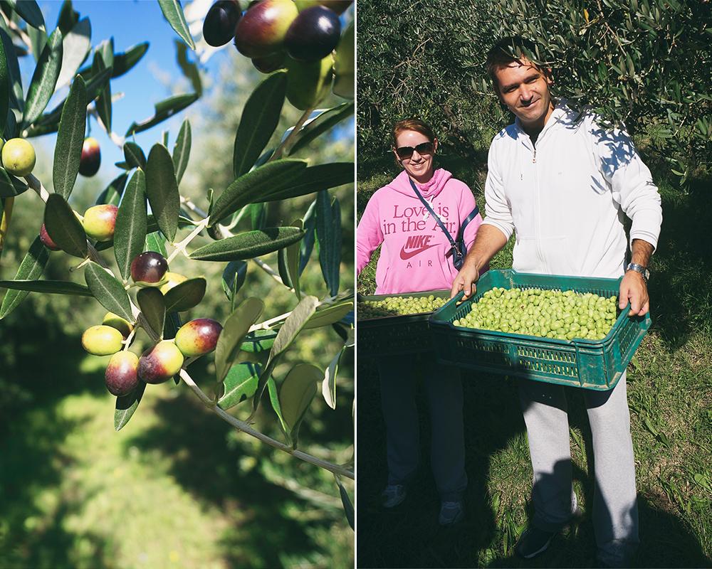 Slovenien-oliver