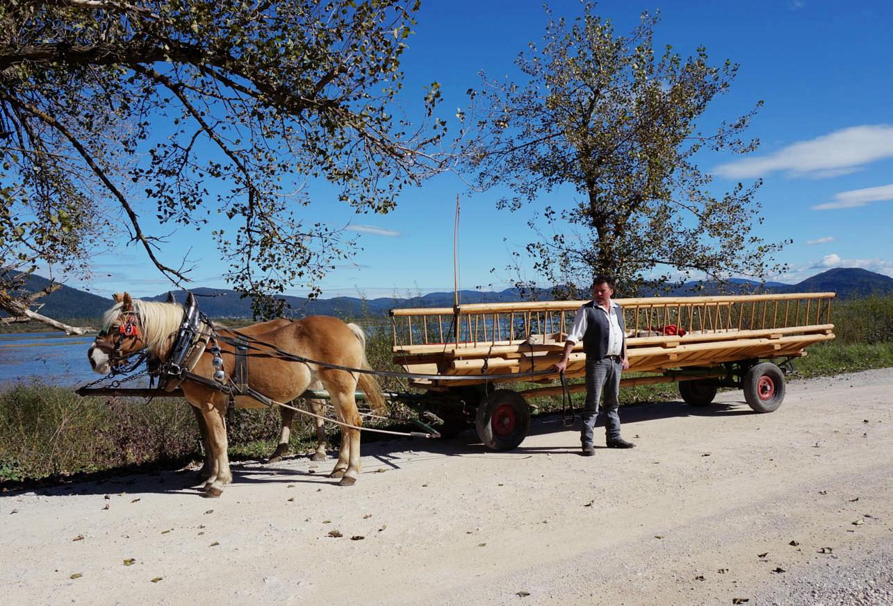 slovenien-hast-och-vagn-19