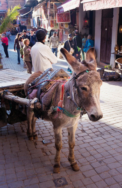 Marocko_Marrakech-15