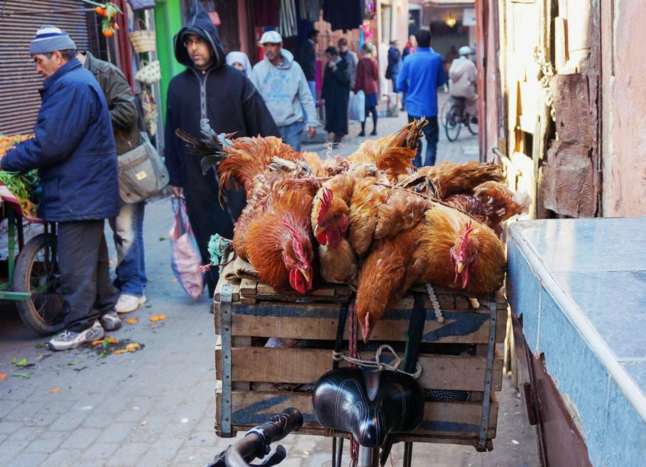 Marocko_Marrakech-29