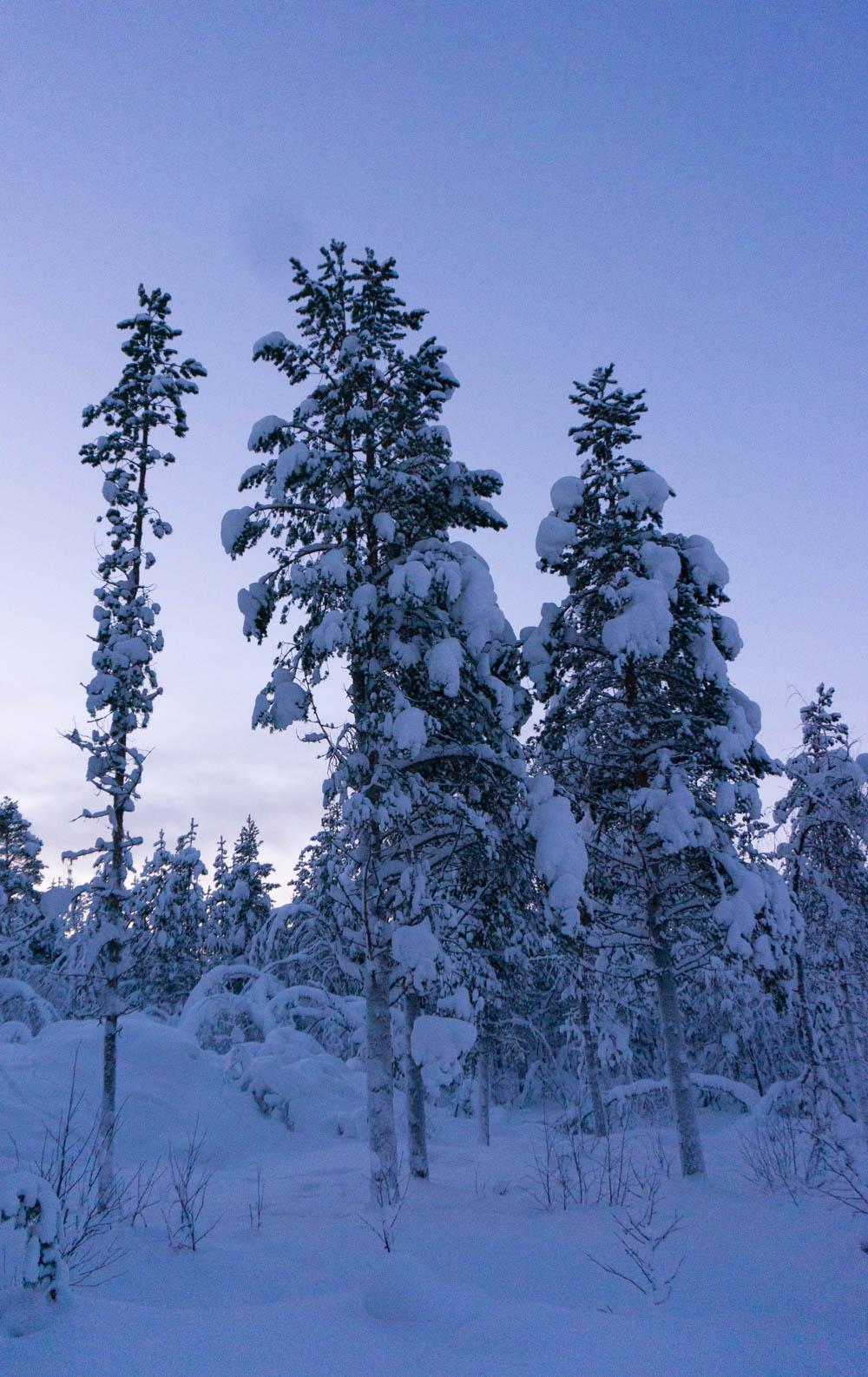 Finland_Lappland-20