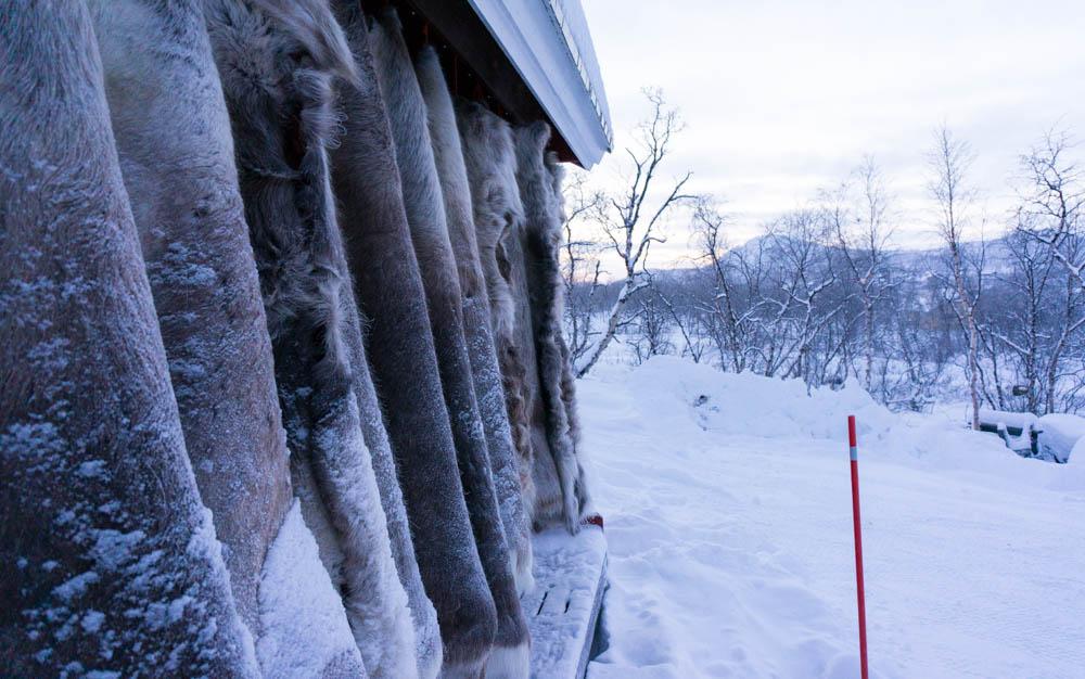 Finland_Lappland-33