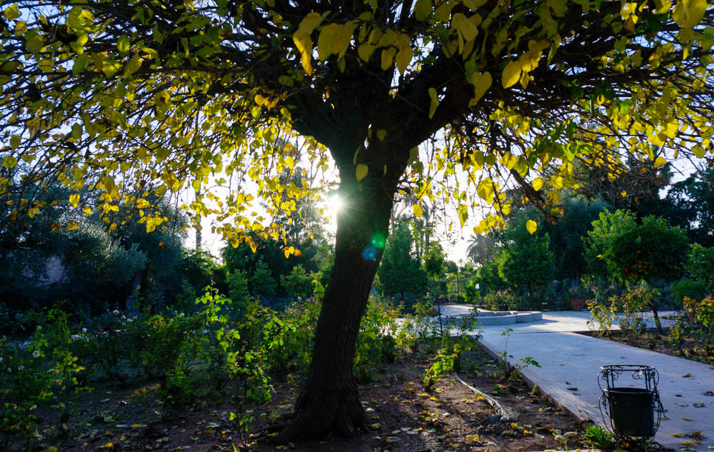 Marocko_Marrakech_garden-4