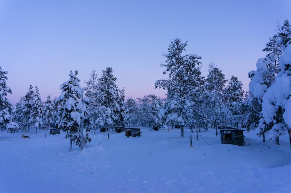 Med husky och släde genom ett stelfruset snölandskap