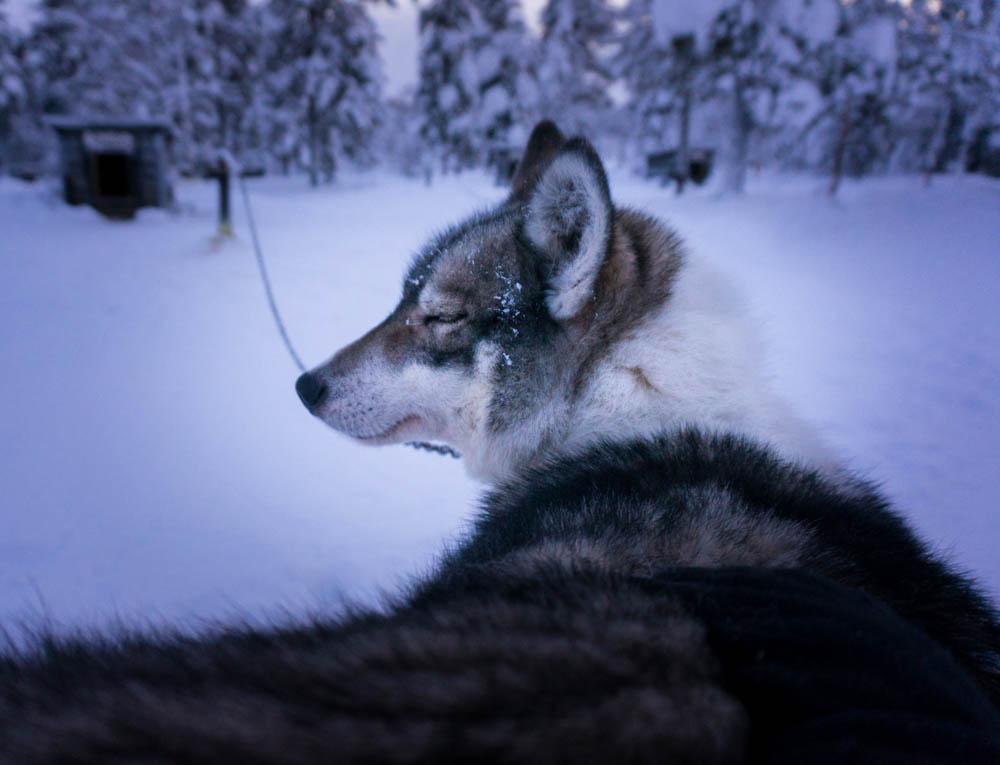Finland_Lappland-119