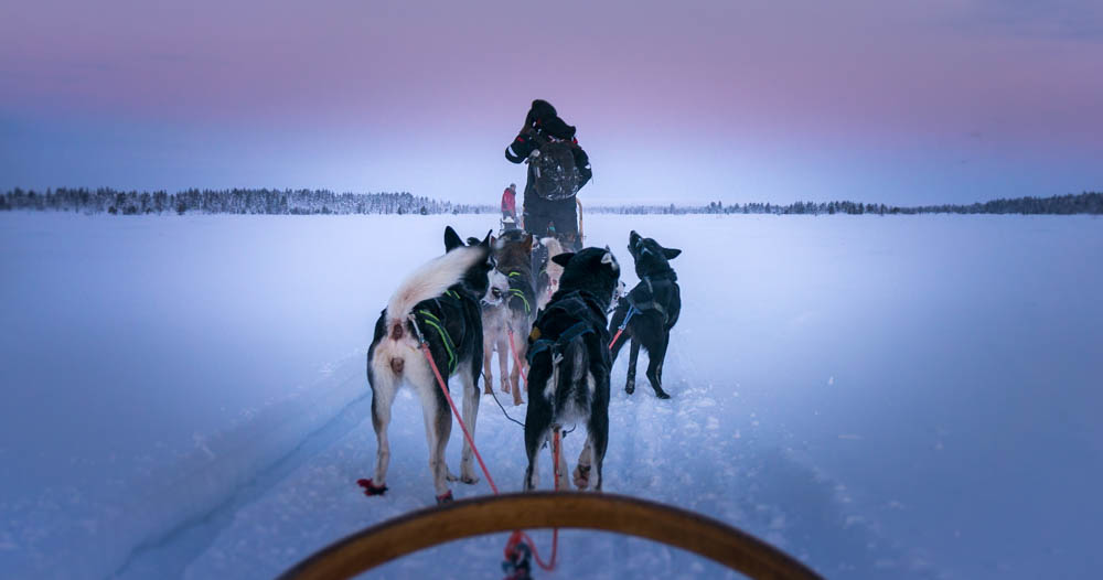 Slädtur med husky i Hetta, Finland