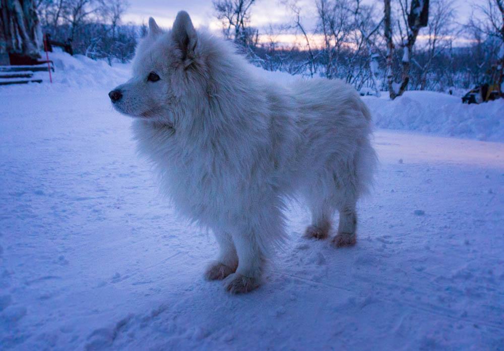 Finland_Lappland_Killpisjarvi-12