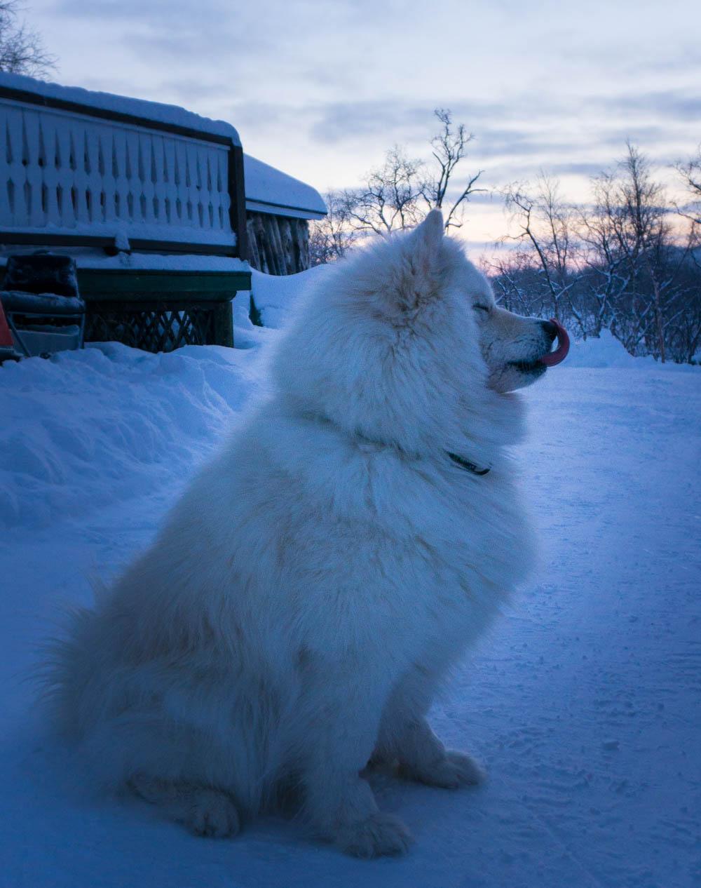 Finland_Lappland_Killpisjarvi-18