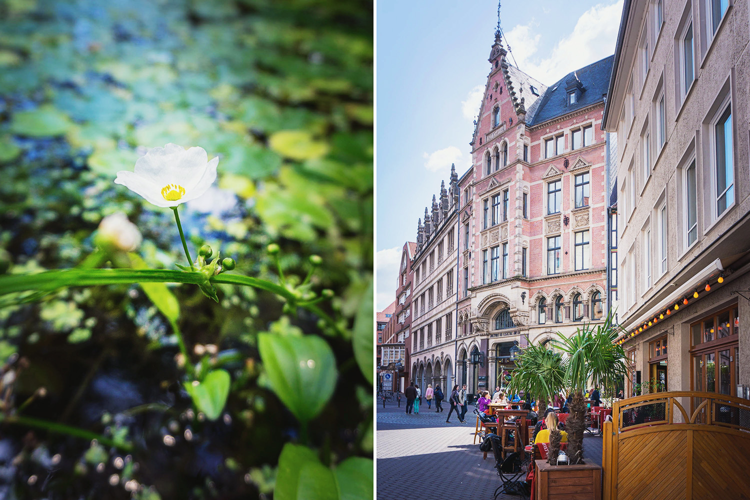 joingermantradition-hannover-84