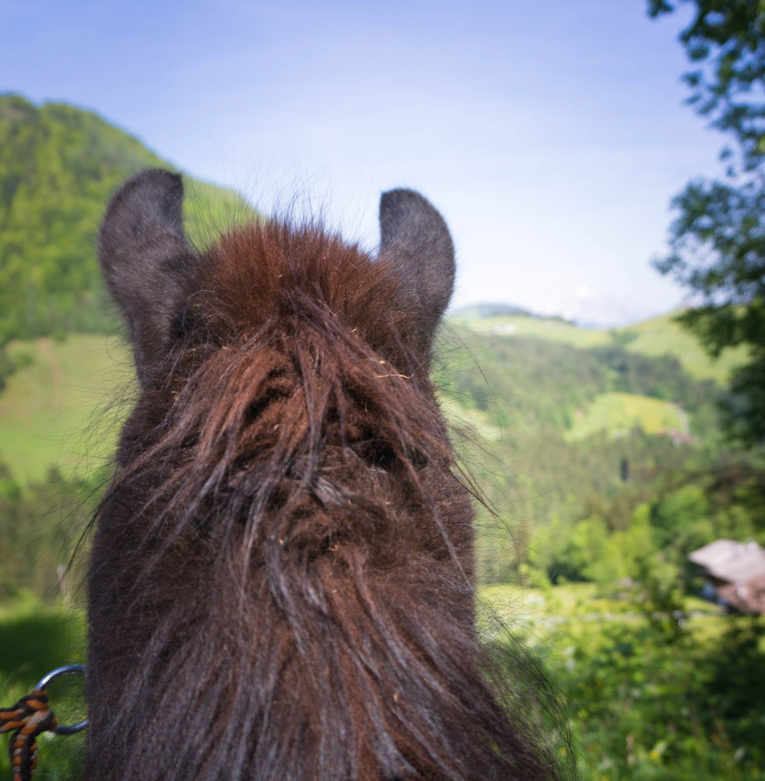 Fantasiresor lamatrekking in Austria