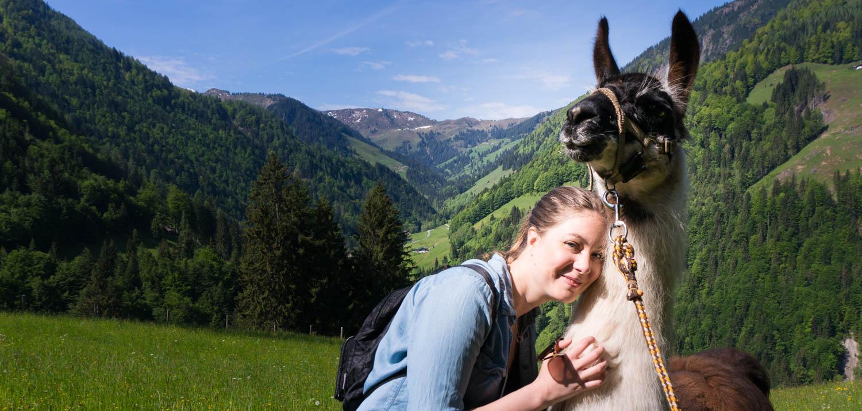 Lamavandring i Tyrolen