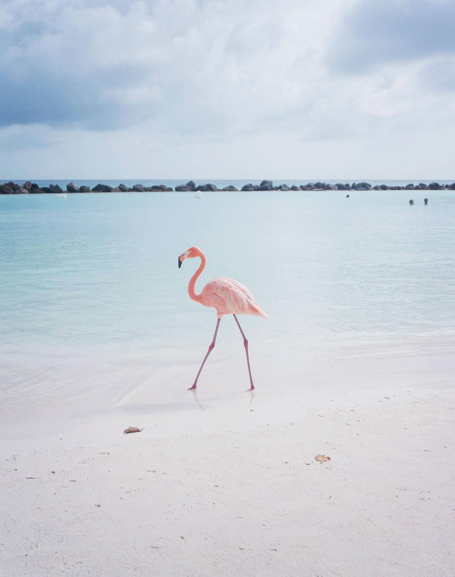 Aruba restips