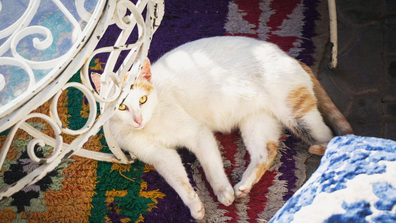 marrakech-katter-10