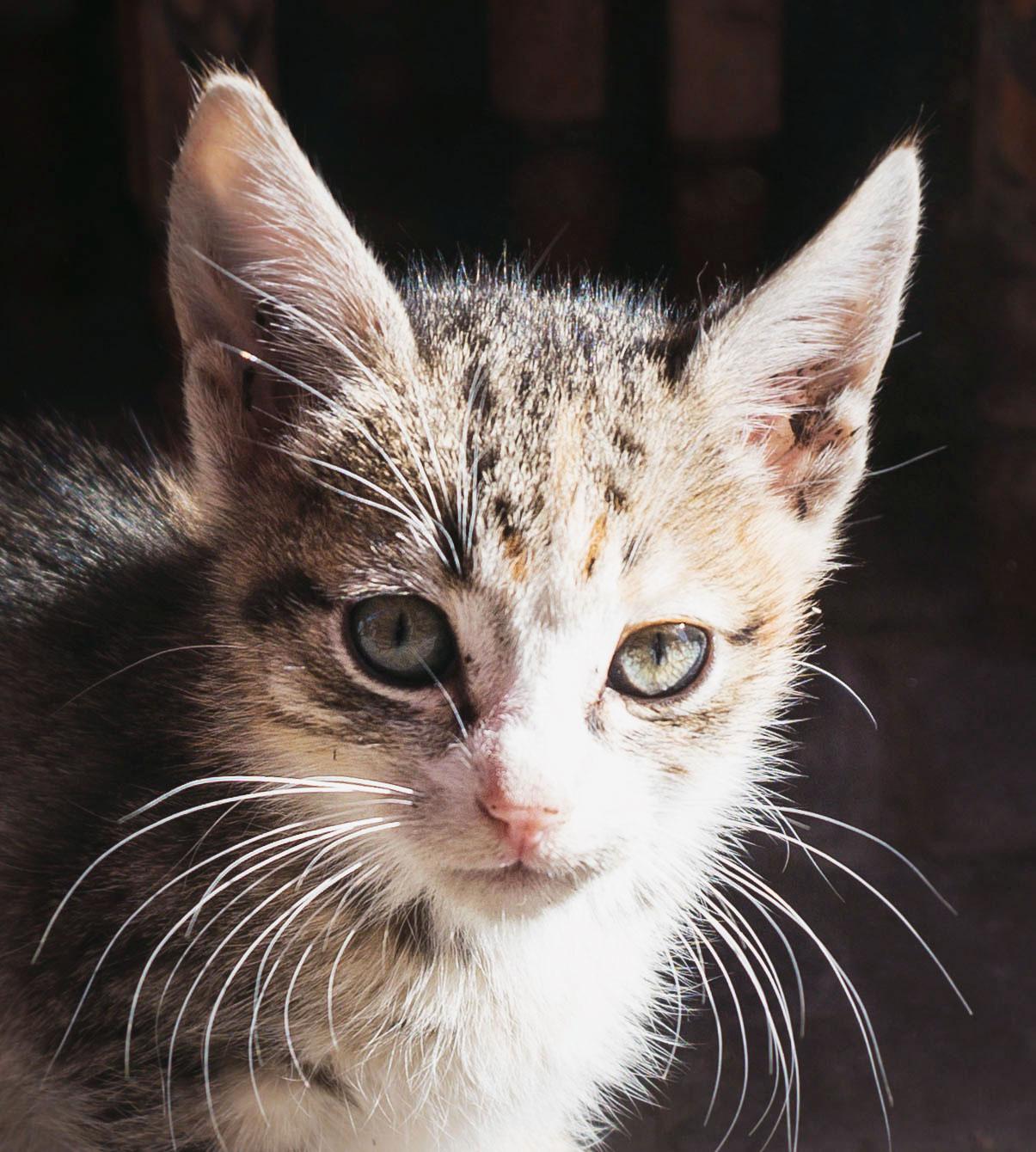 The street cats of Marrakech