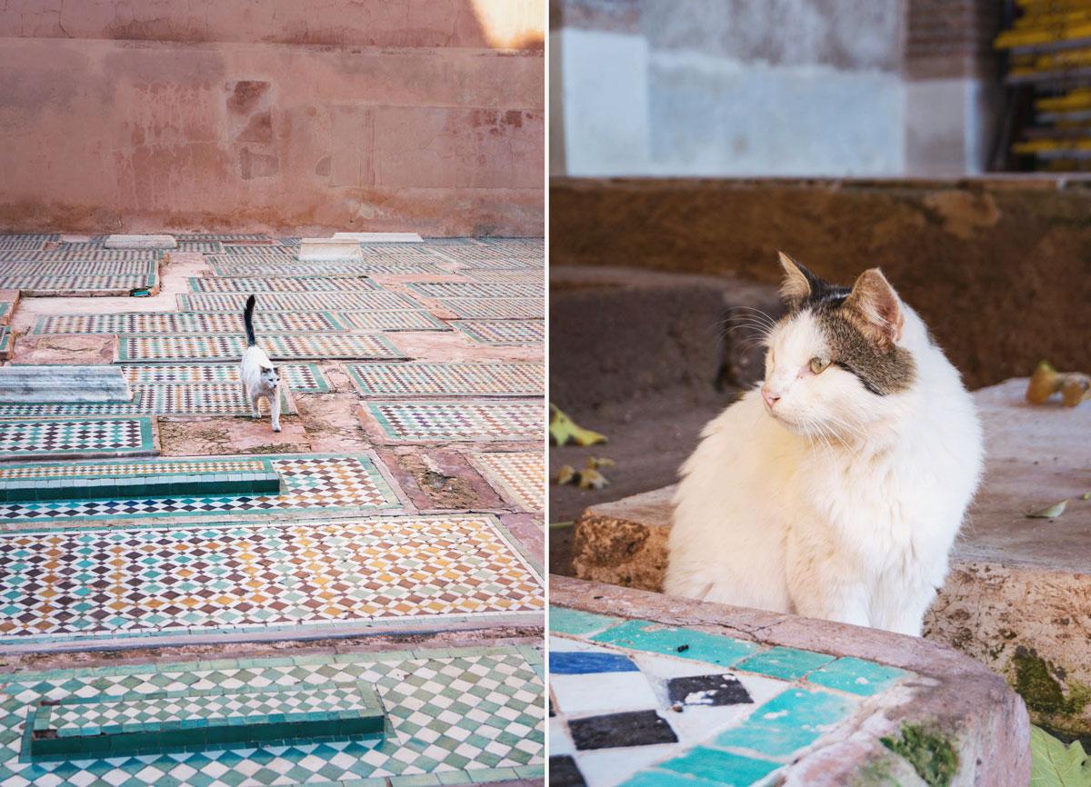 marrakech-katter-2