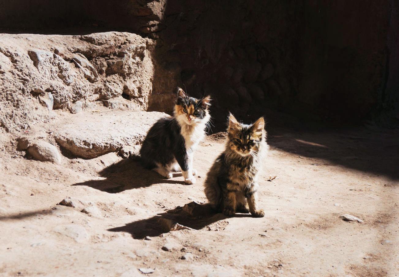 marrakech-katter-7