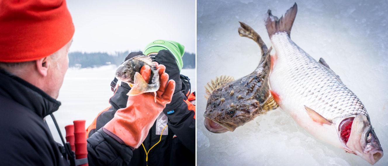 Hur du bäst raskar över isen i Helsingfors