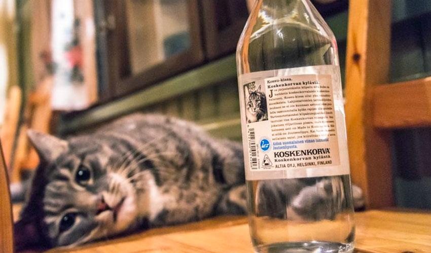 Till och med katten hette Koskenkorva och återfinns även på vodkaflaskans baksida. Foto: The Travel Tester - www.thetraveltester.com.