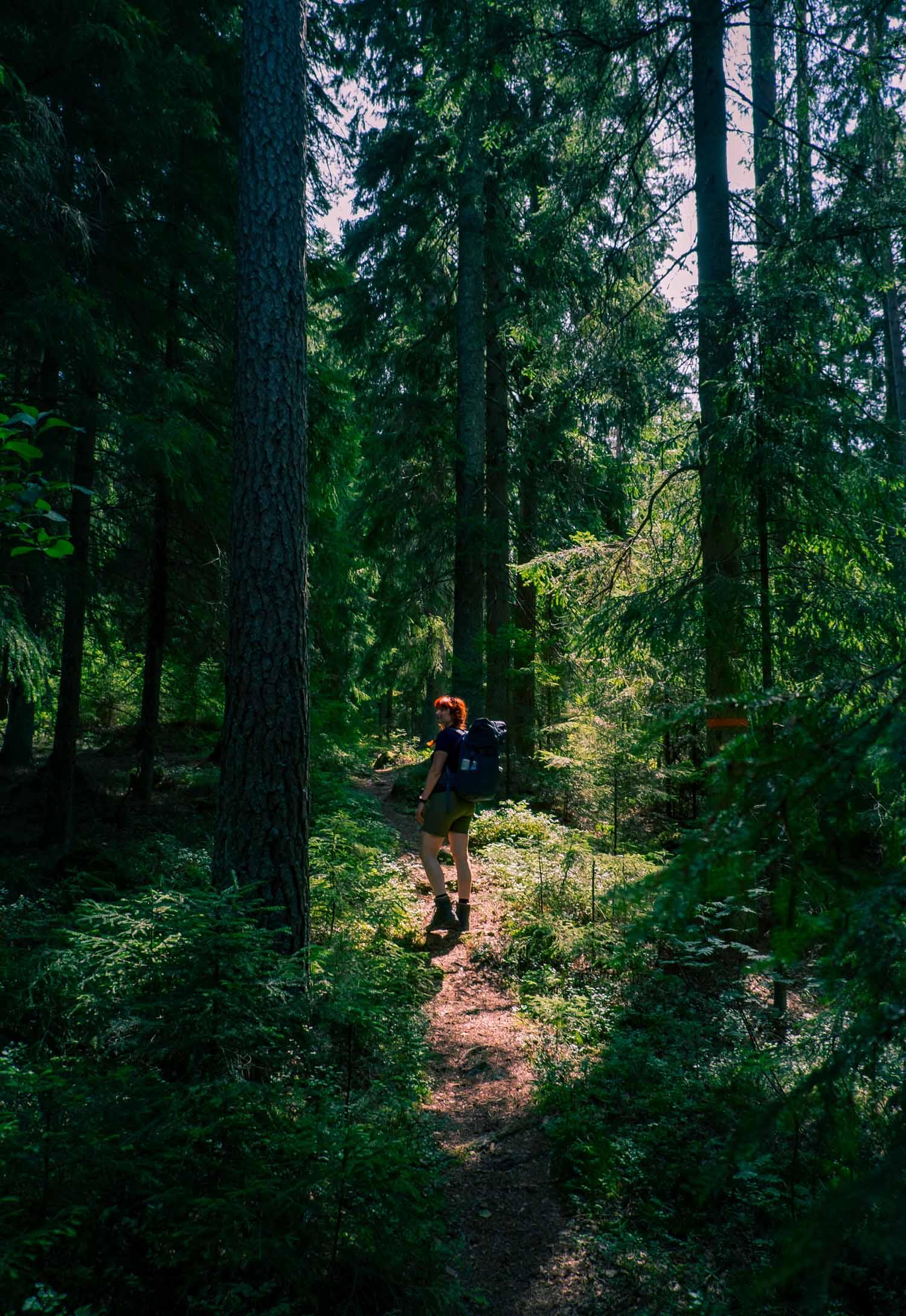Vandring i Tiveden – Bergslagsleden