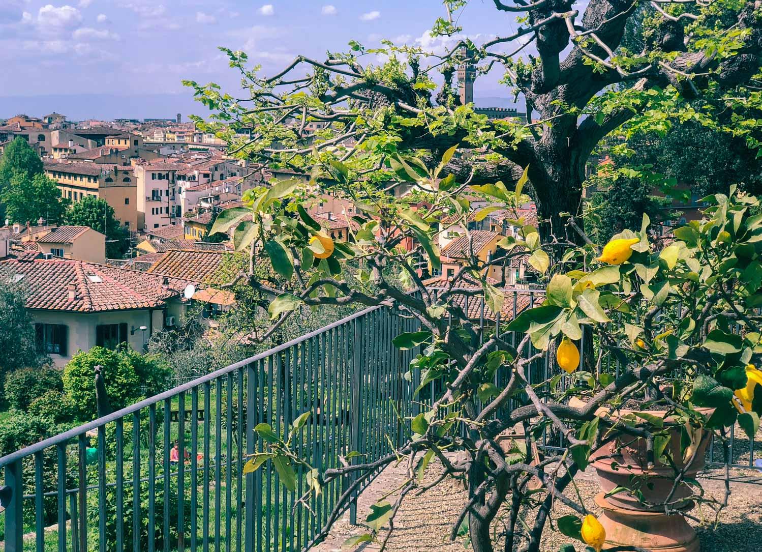 Giardino delle rose i Florens, Toscana