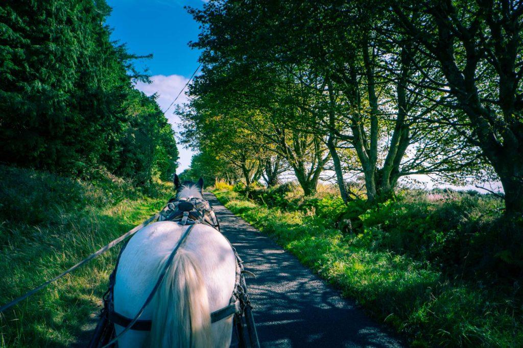 Tinkerhästen Bravos rygg på Irland