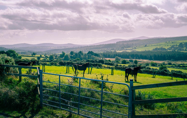 Hästar på Irland