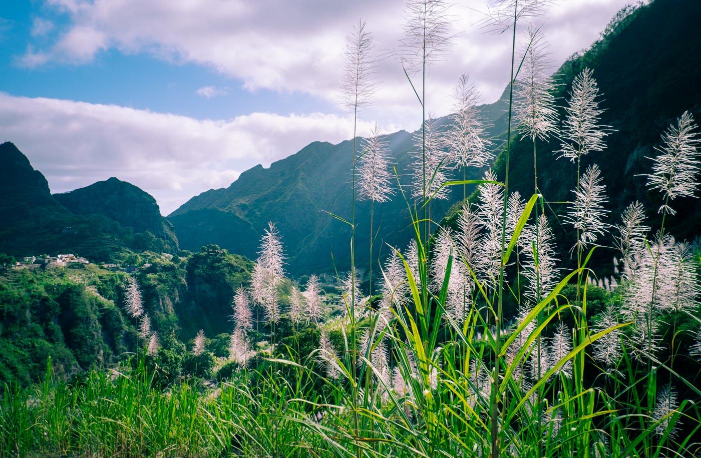 Santo Antão i Kap Verde – sockerrör