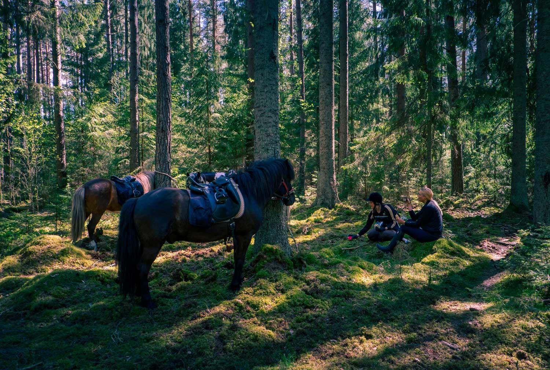 Lunchpaus längs med Ridled Sörmland – allt annat än en vanlig turridning