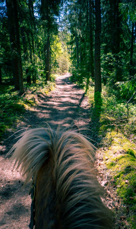 Till häst längs med Ridled Sörmland
